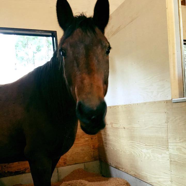 thumb_horse01