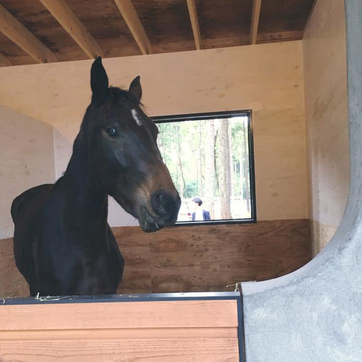 thumb_horse02