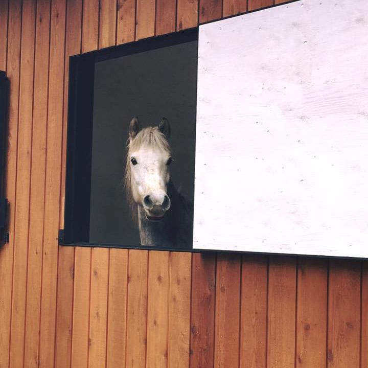 thumb_horse03