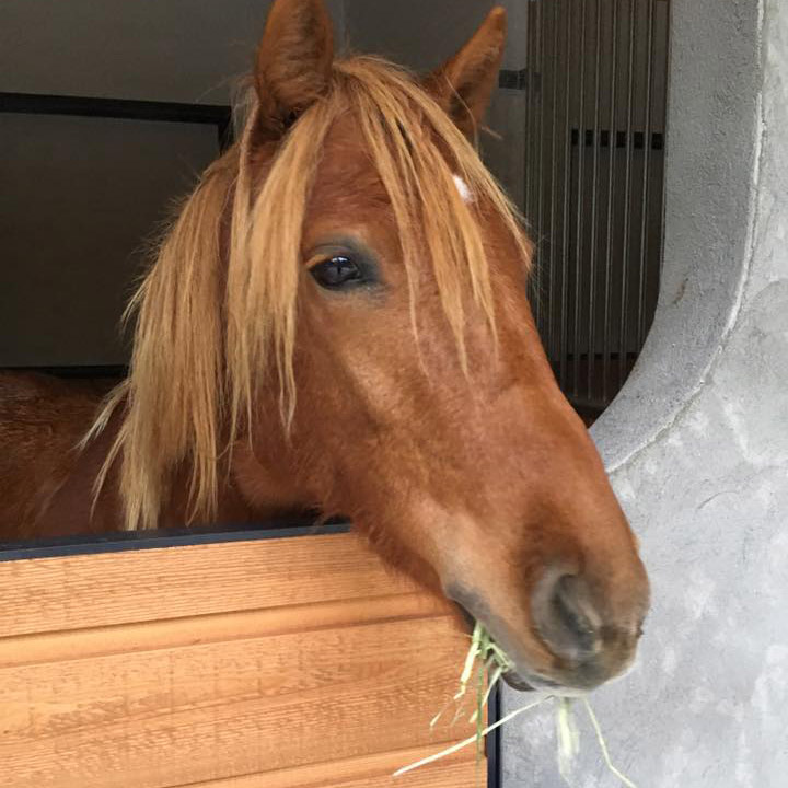 thumb_horse04