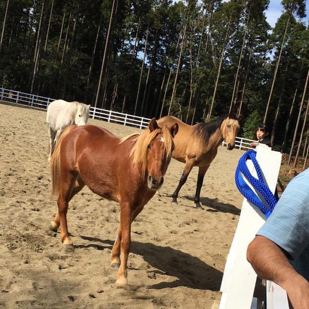 thumb_horse06