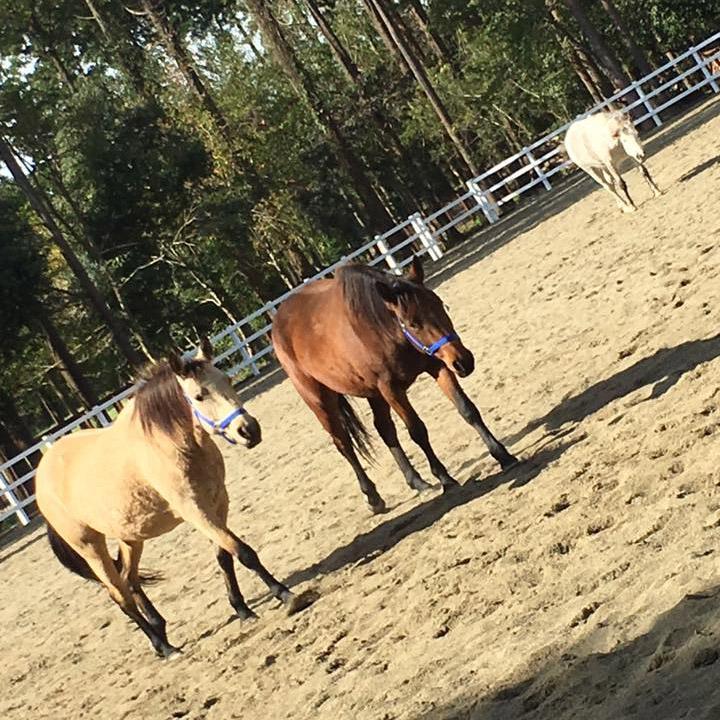 thumb_horse07