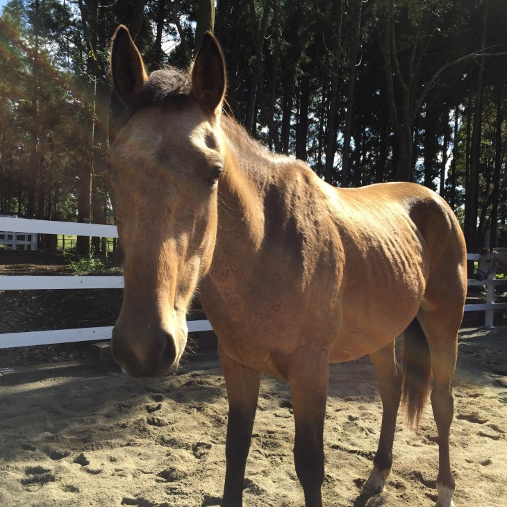 thumb_horse10