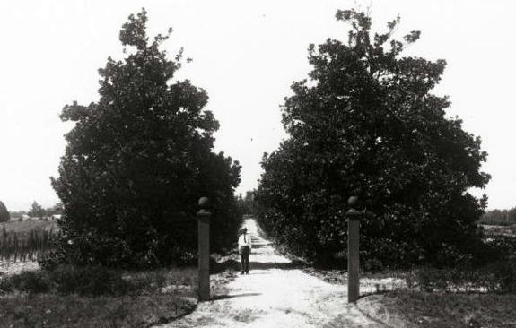 19世紀荘園時代のマグノリアレーンと果樹農園だった頃