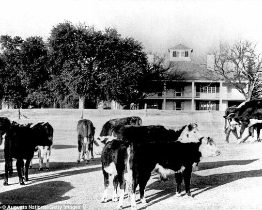 戦時中、コース内には家畜が放牧された悲しい歴史もある