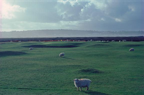 Westward Ho ! 9番羊がコース内で戯れる牧歌的リンクス